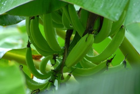 Seychelles: Producing Fresh Ideas for Food Security
